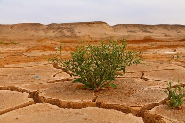 rostlina na vyprahlé půdě